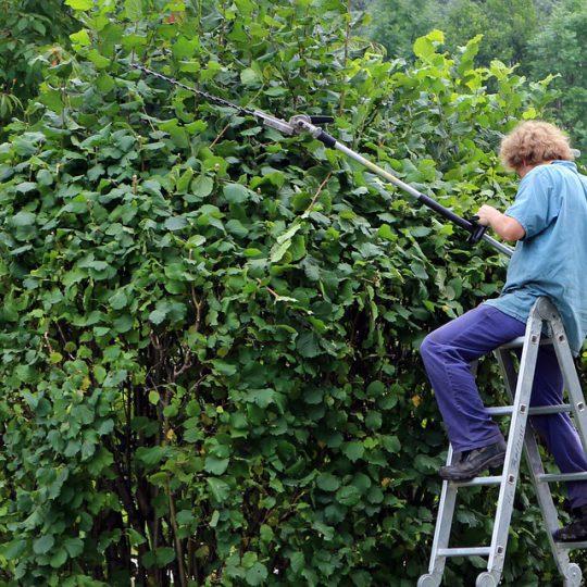 Bespaartips voor het opknappen van je tuin