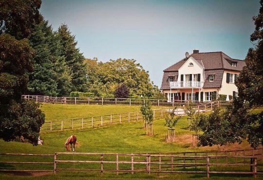 Een paard aan huis